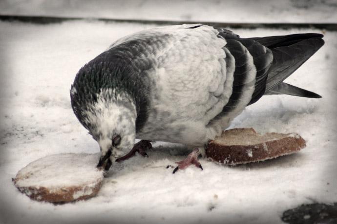 Bird-pity