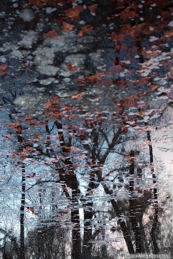 Treetop - Edina Lorincz